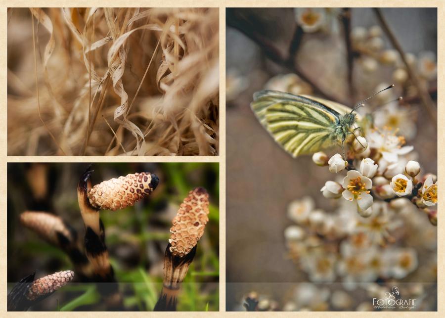 Butterfly Blogvorschau